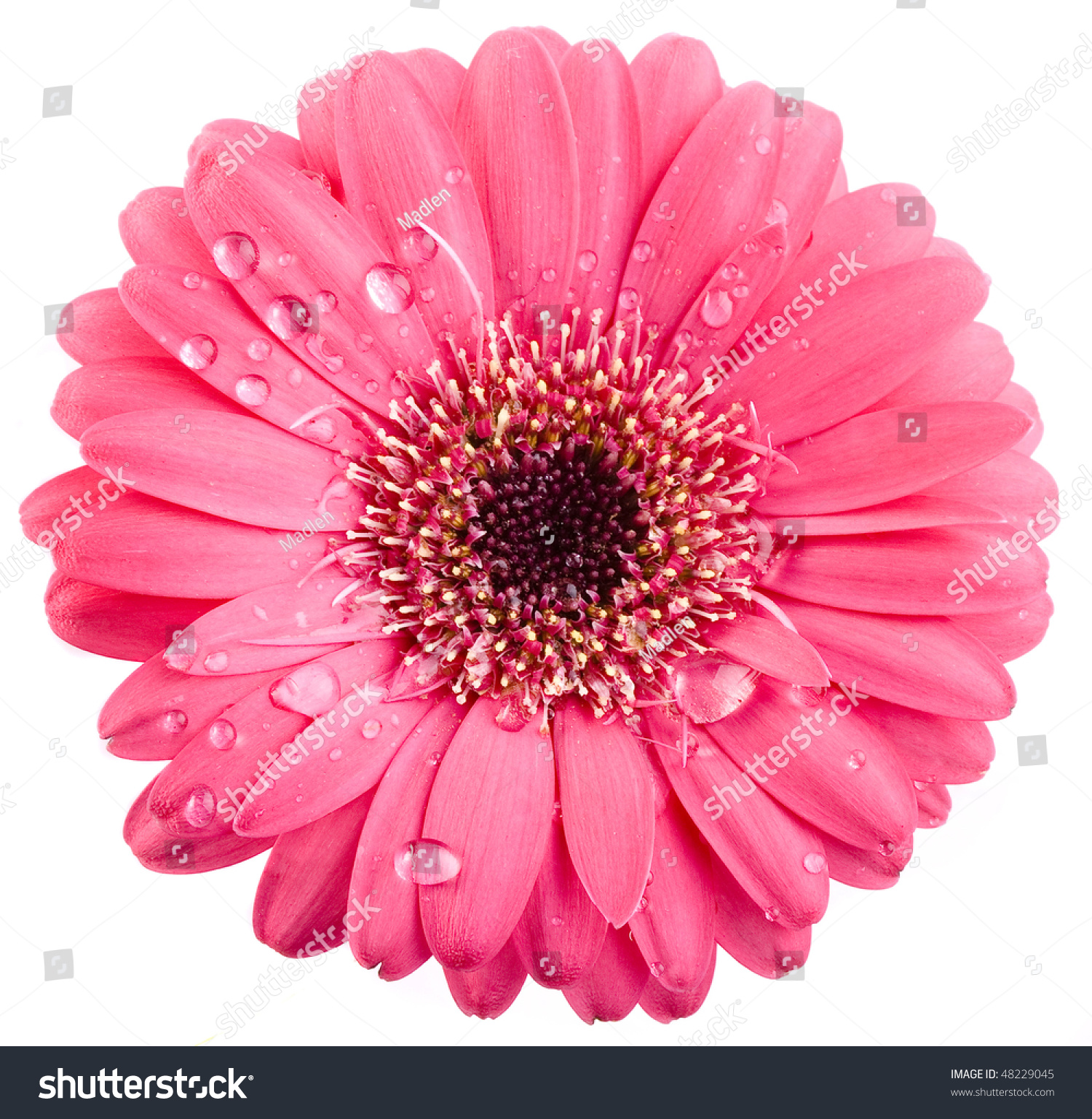 Pink flower head surface top view stock photo edit now 48229045 pink flower head surface top view isolated on white background mightylinksfo