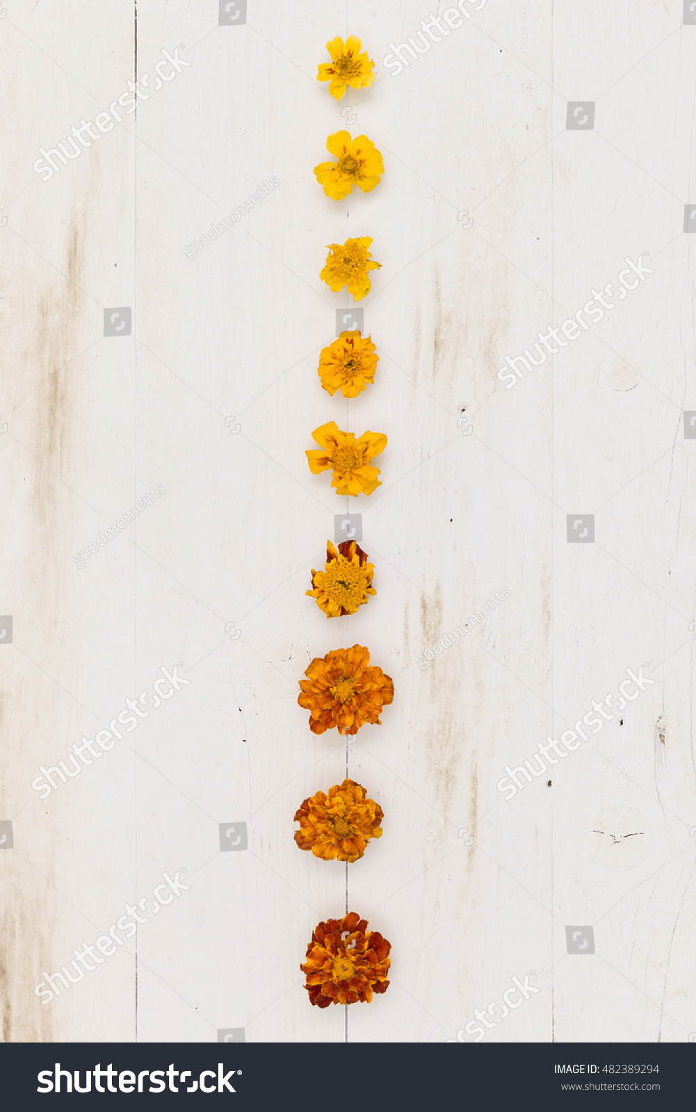 Top View On Line Flowers Small Stock Photo Edit Now 482389294