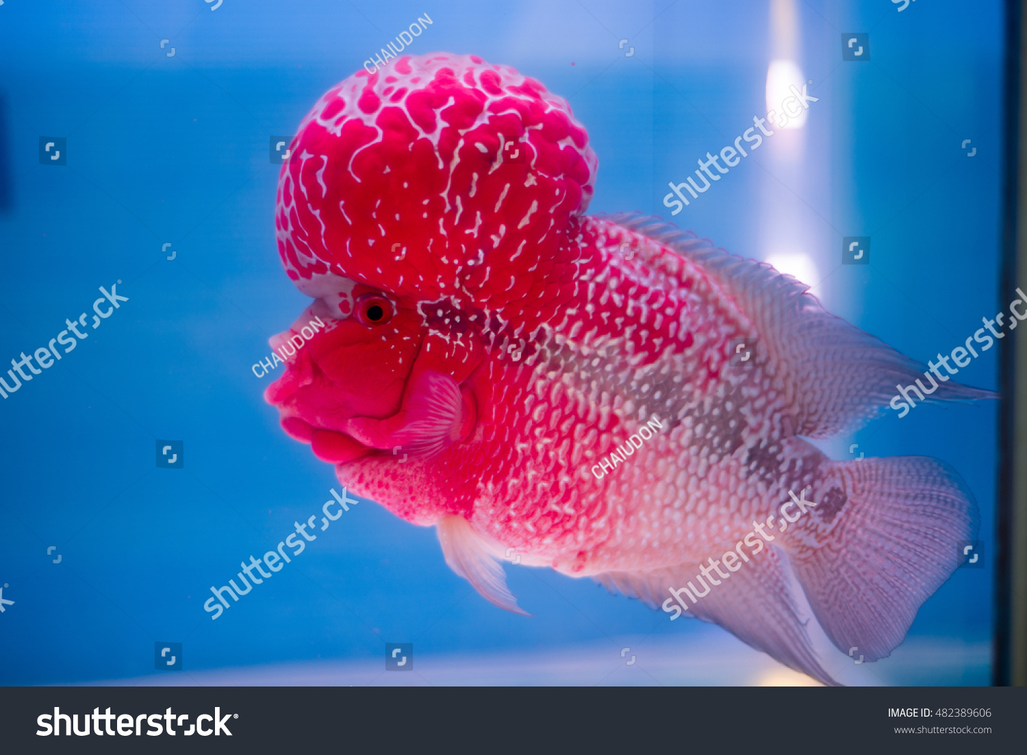 Colorful fish in fish tank   EZ Canvas