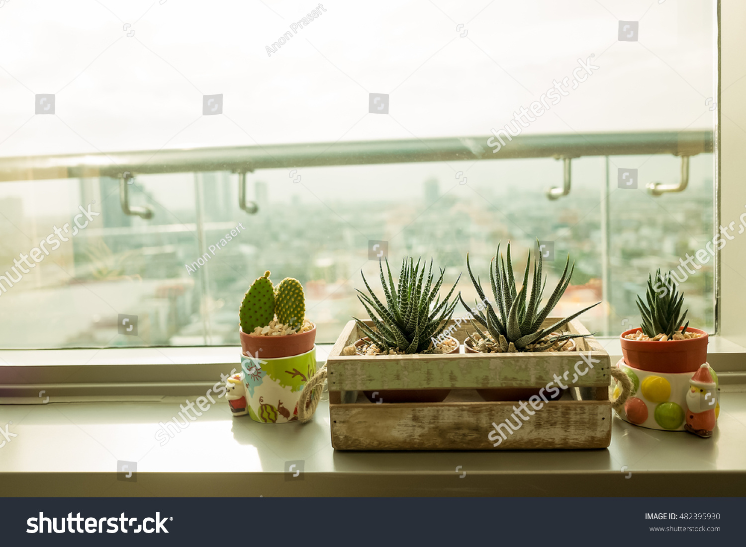Where To Put Cactus In Living Room