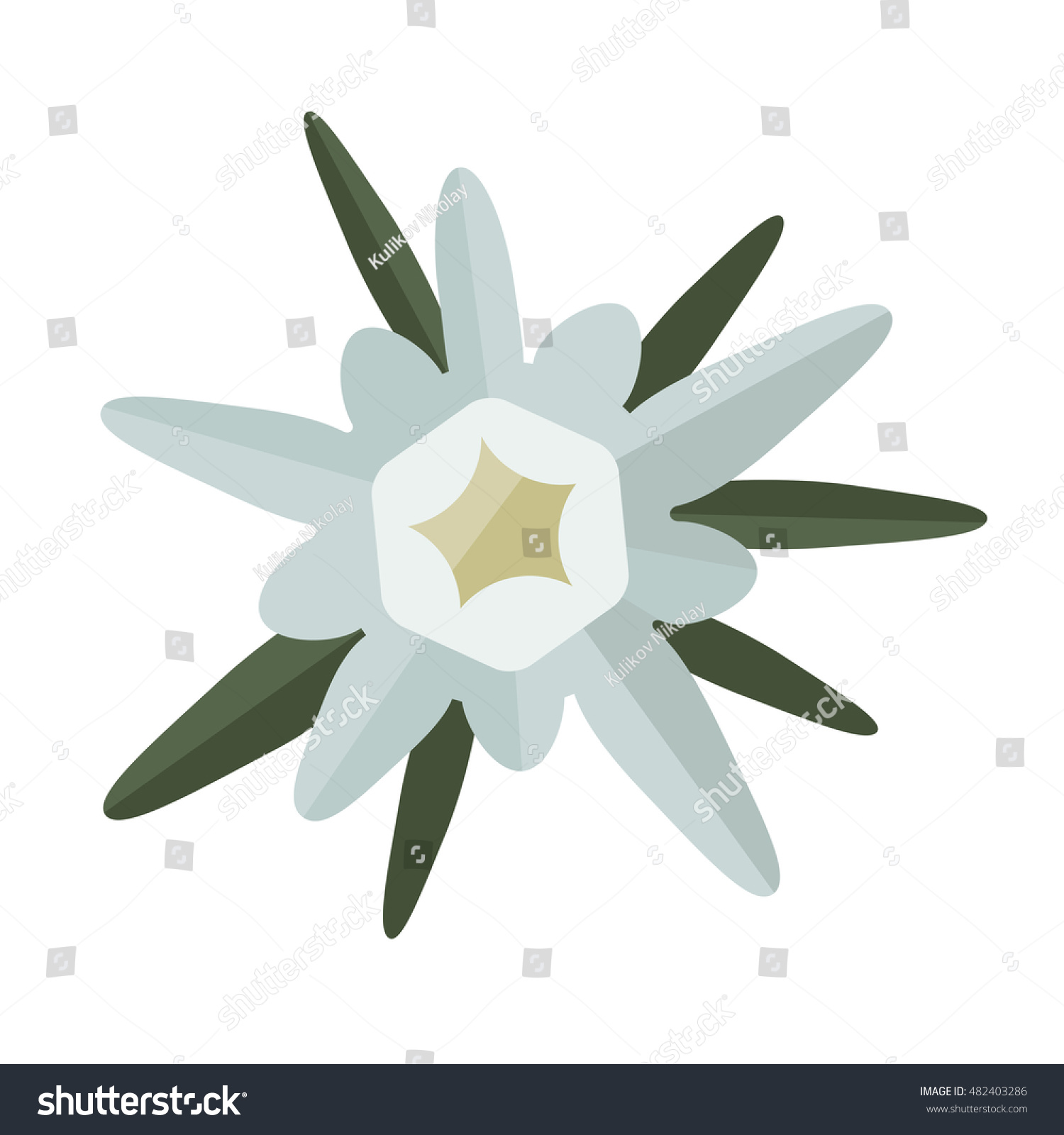 Edelweiss Flower Isolated On White Background Stock