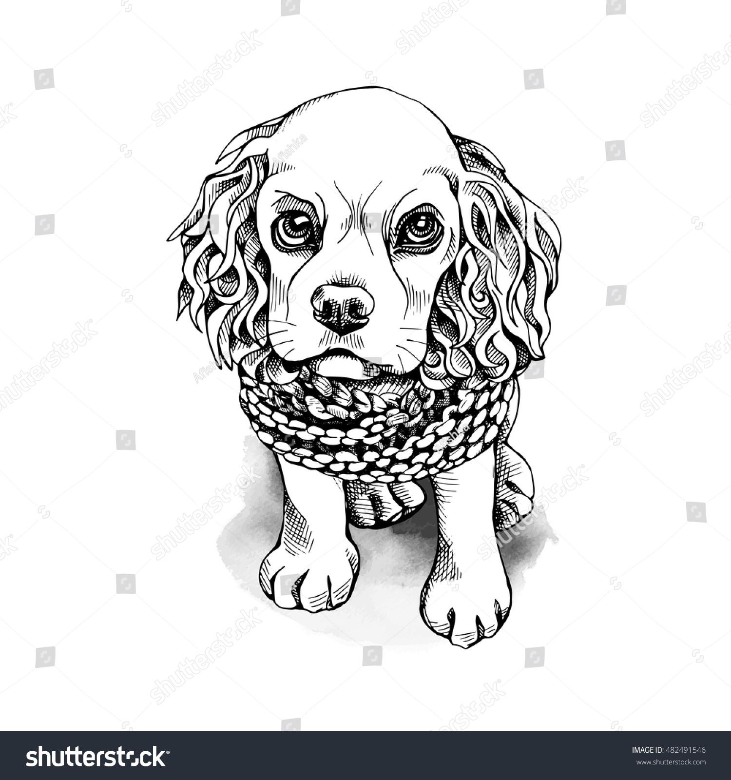 Vector De Stock Libre De Regalias Sobre El Cachorro Cocker Spaniel Con Bufanda482491546