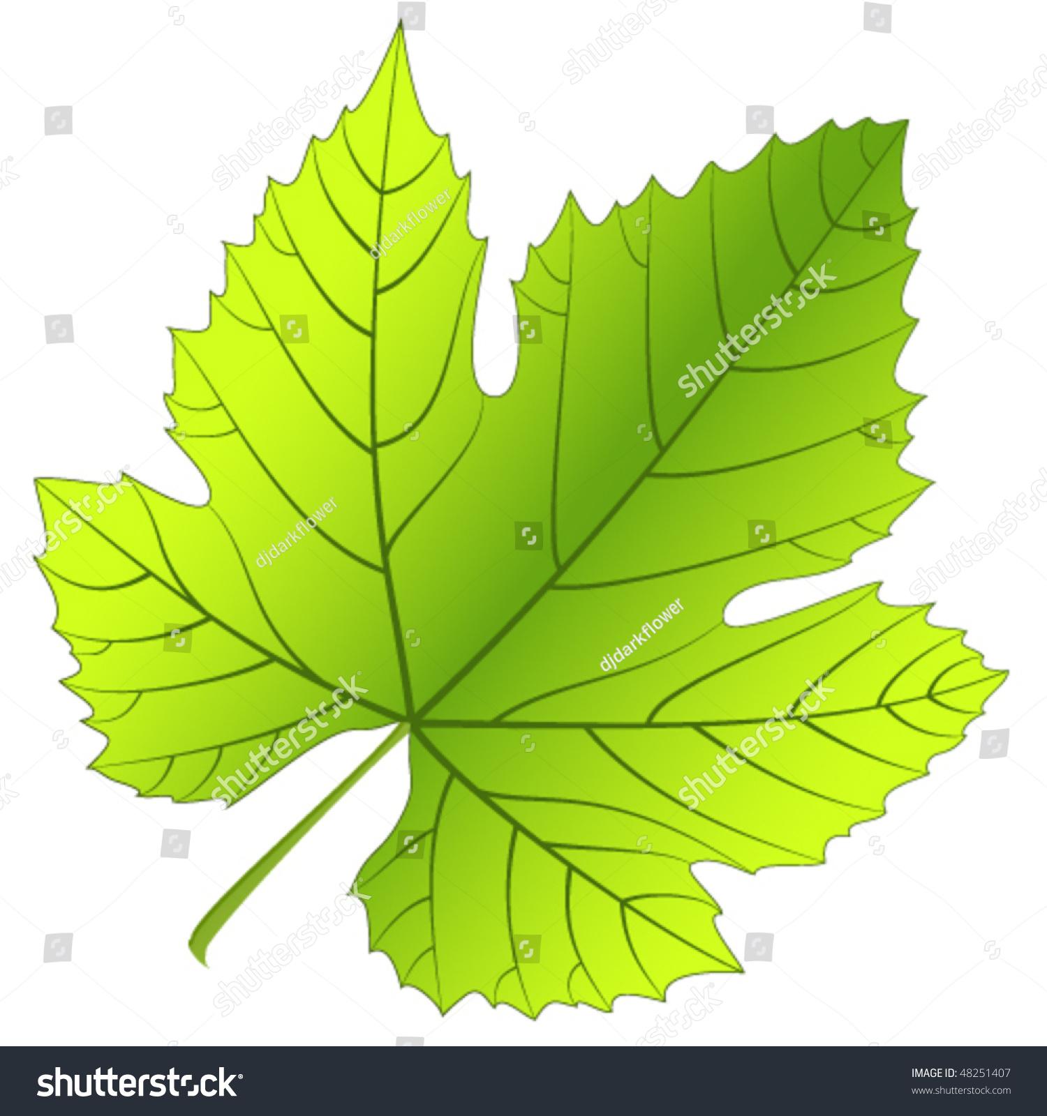 Vine Leaf Stock Images, Royalty-Free Images & Vectors ...