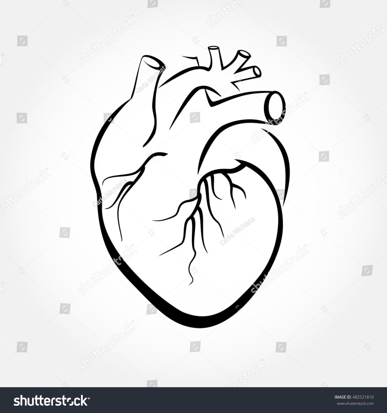 Anatomy Heart Drawing Images - human body anatomy