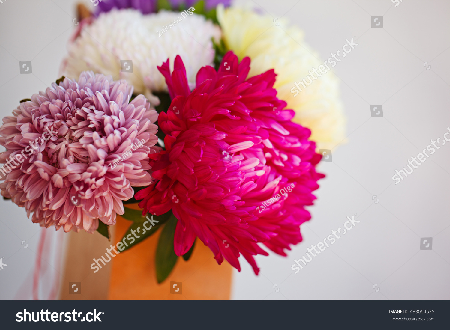 Royalty Free Beautiful Colorful Aster Flower Bouquet 483064525