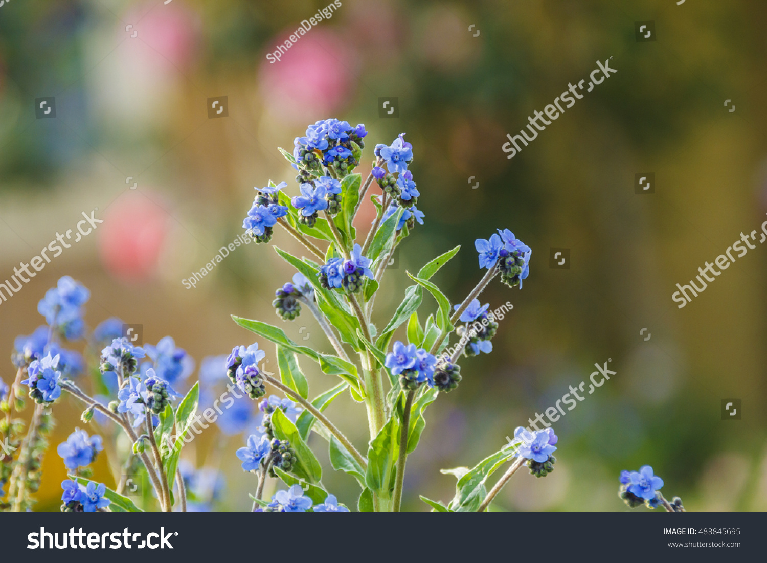 Small blue flower details with granular cluster buds ez canvas id 483845695 izmirmasajfo