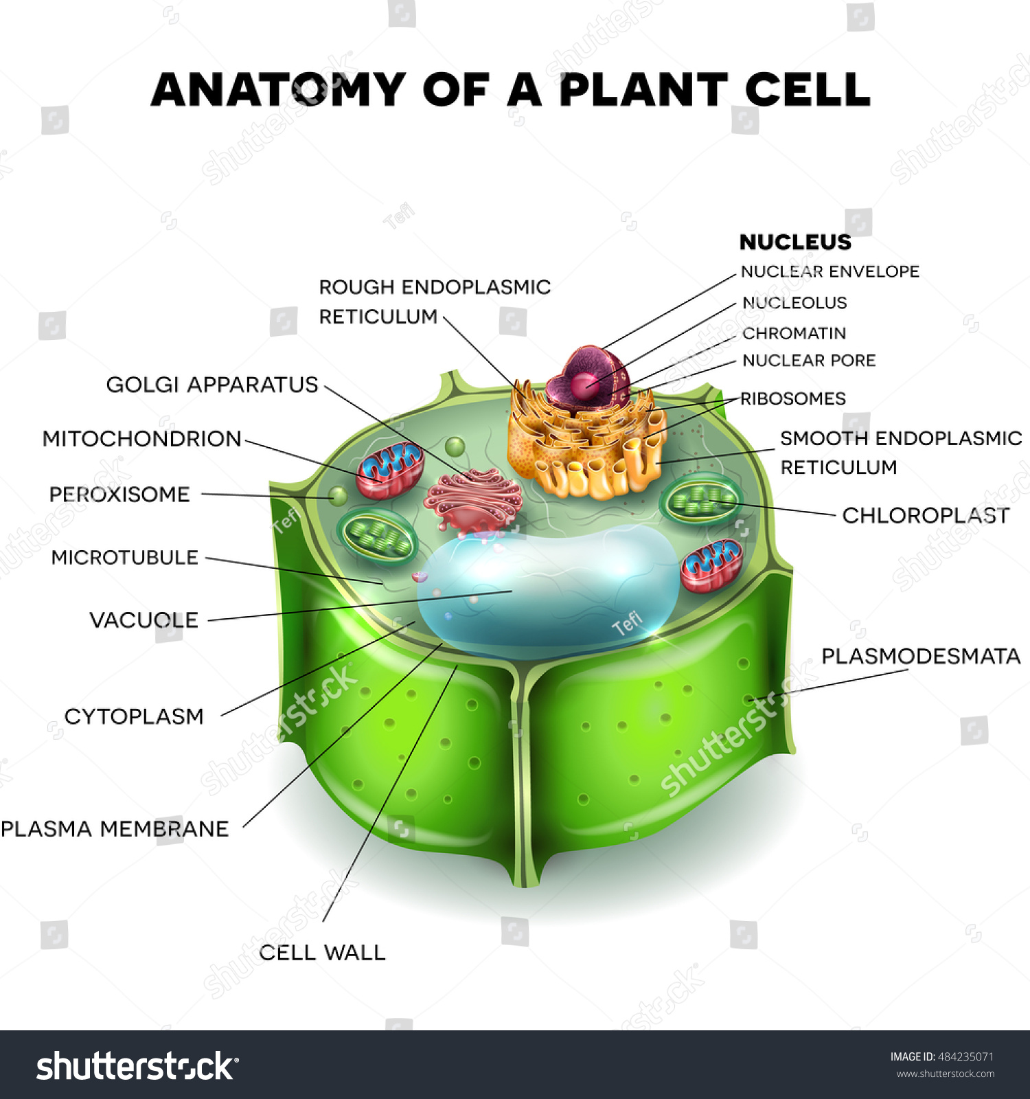 plant cell structure, cross section of the cell detailed colorful 3d  illustration