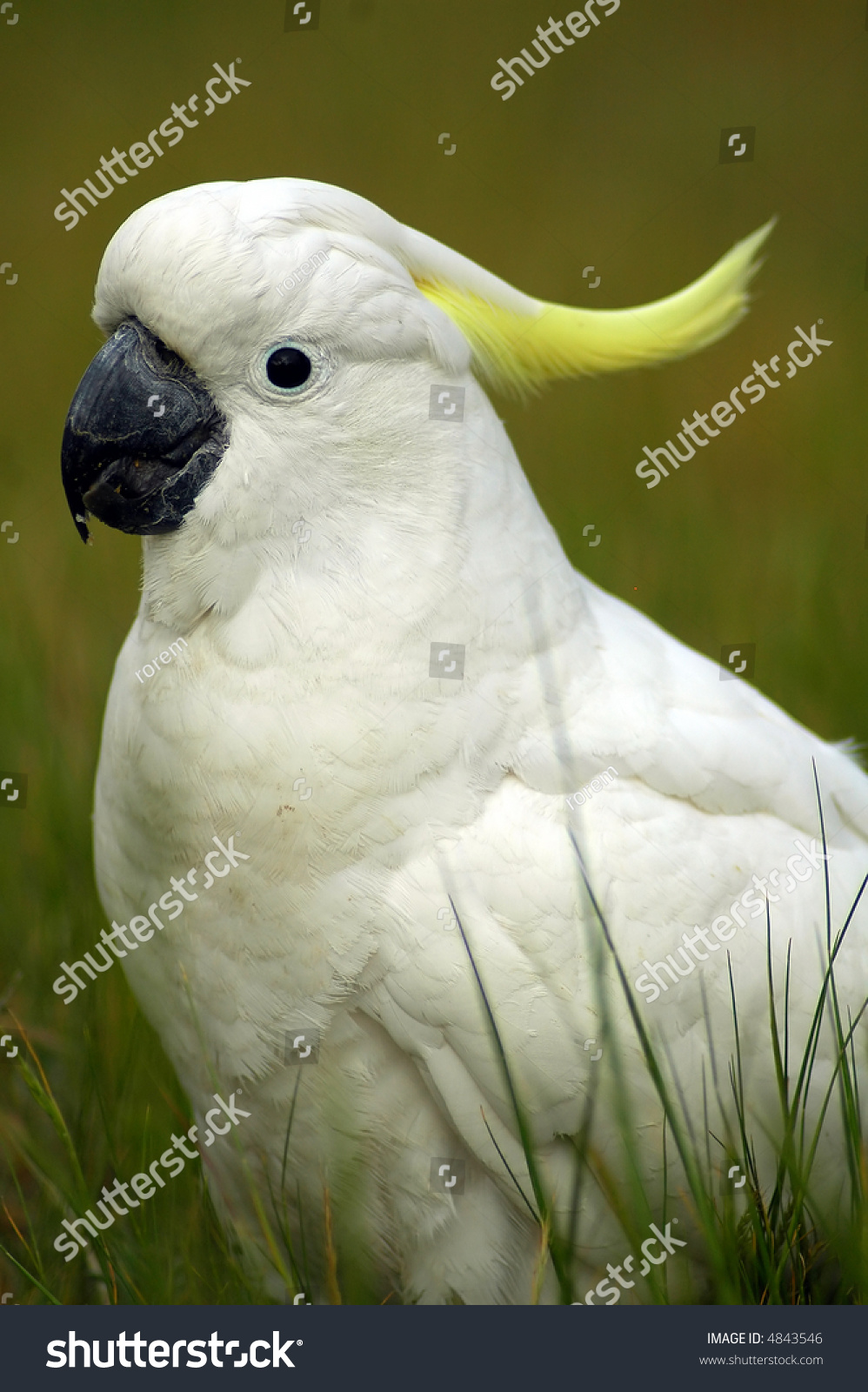 white parrot yellow feathers on head stock photo edit now 4843546
