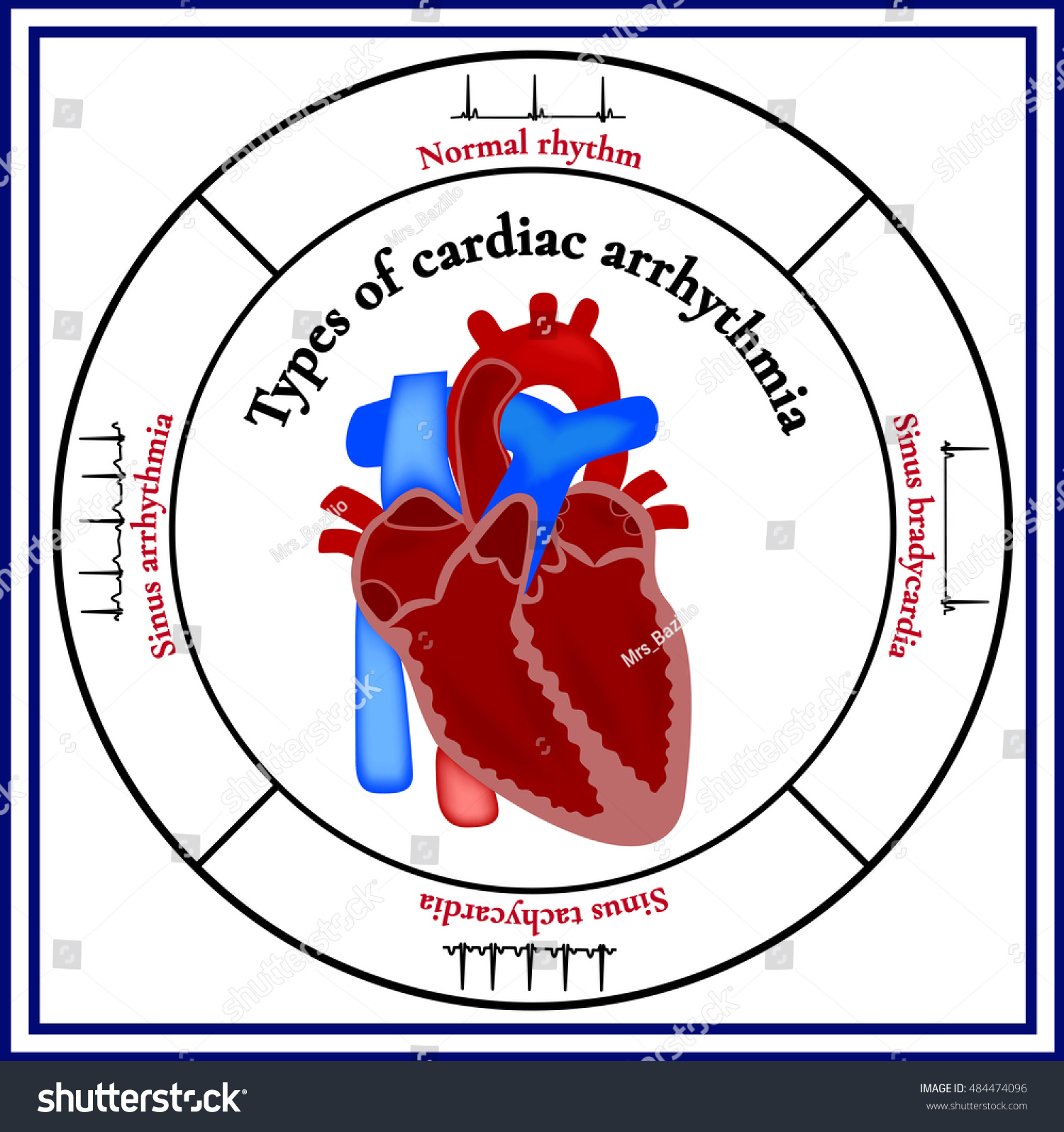 Heart Structure Organ Circulatory System Types Stock Vector Royalty