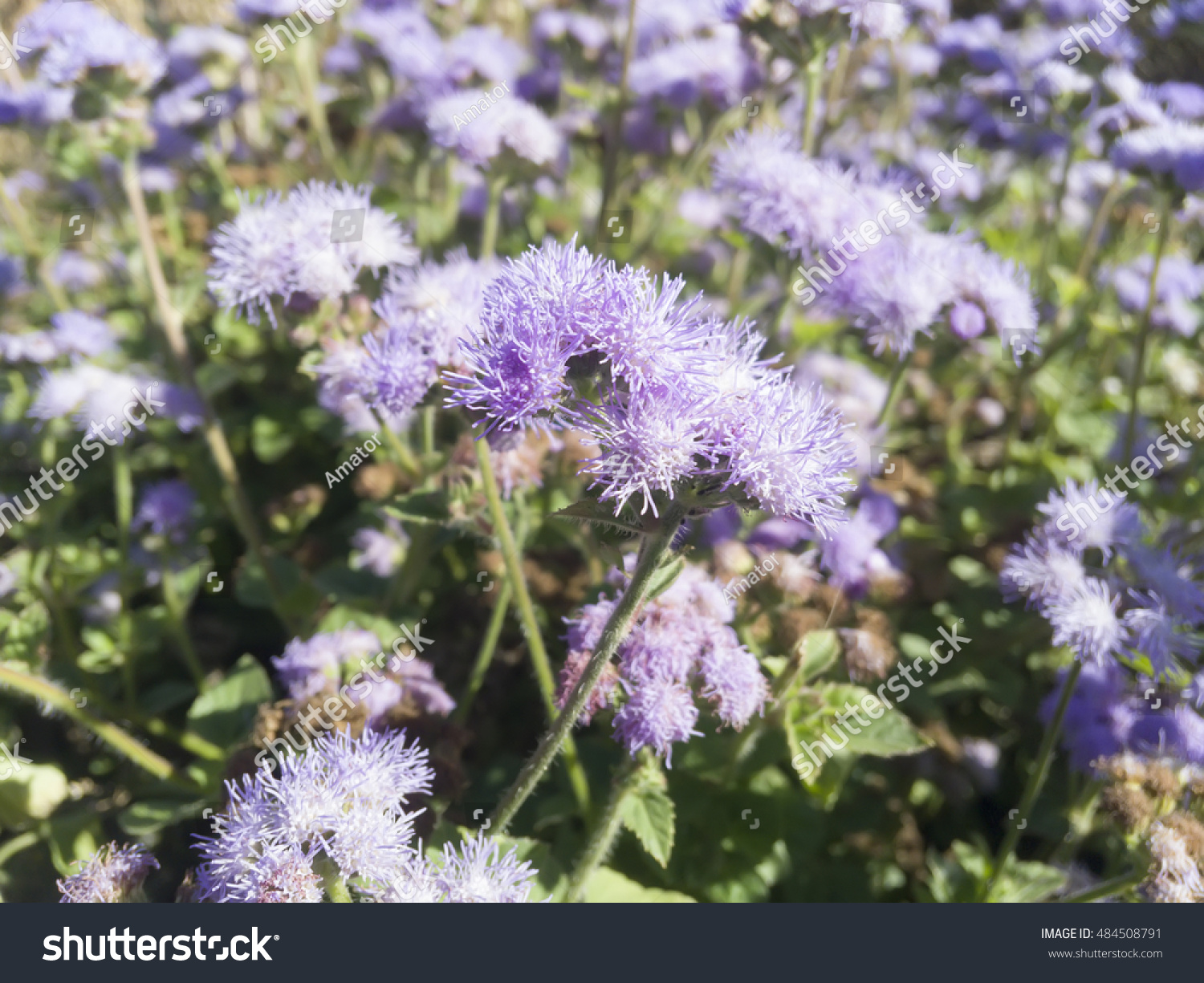 Purple Small Flowers On Green Background Ez Canvas