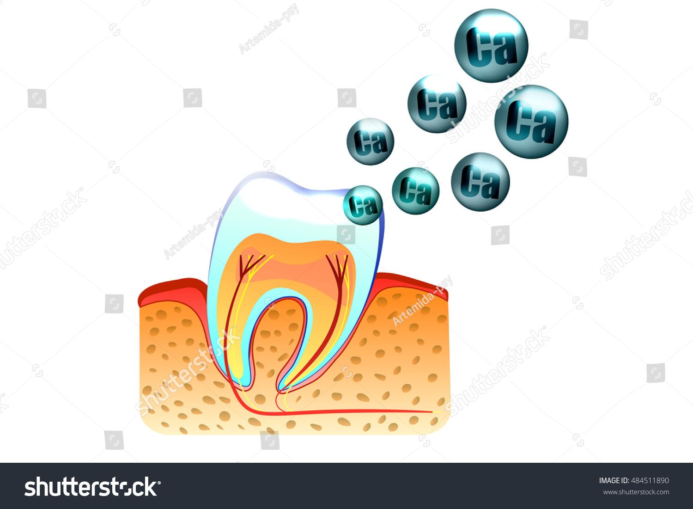 Illustration teeth saturation calcium tooth enamel stock vector illustration of teeth and saturation with calcium of tooth enamel ccuart Gallery
