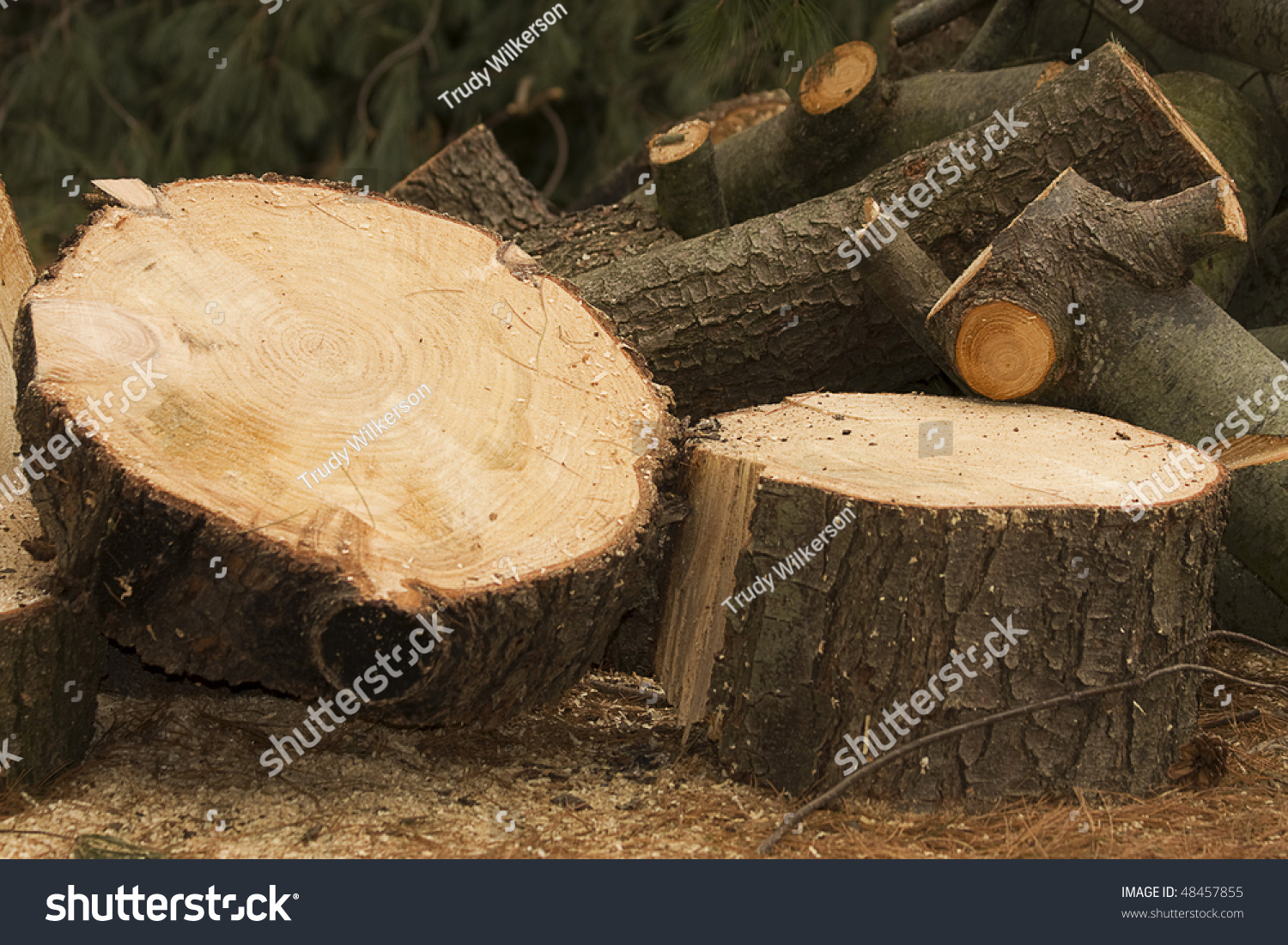 how to cut down a large tree