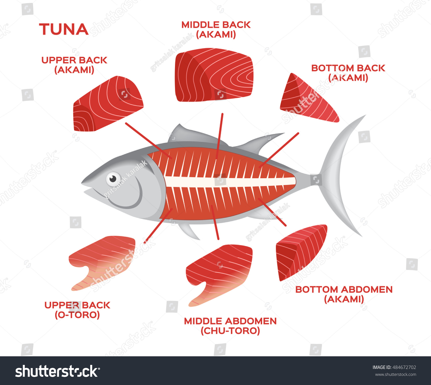 Infographic Tuna Cuts On White Background Stock Vector (Royalty Free ...