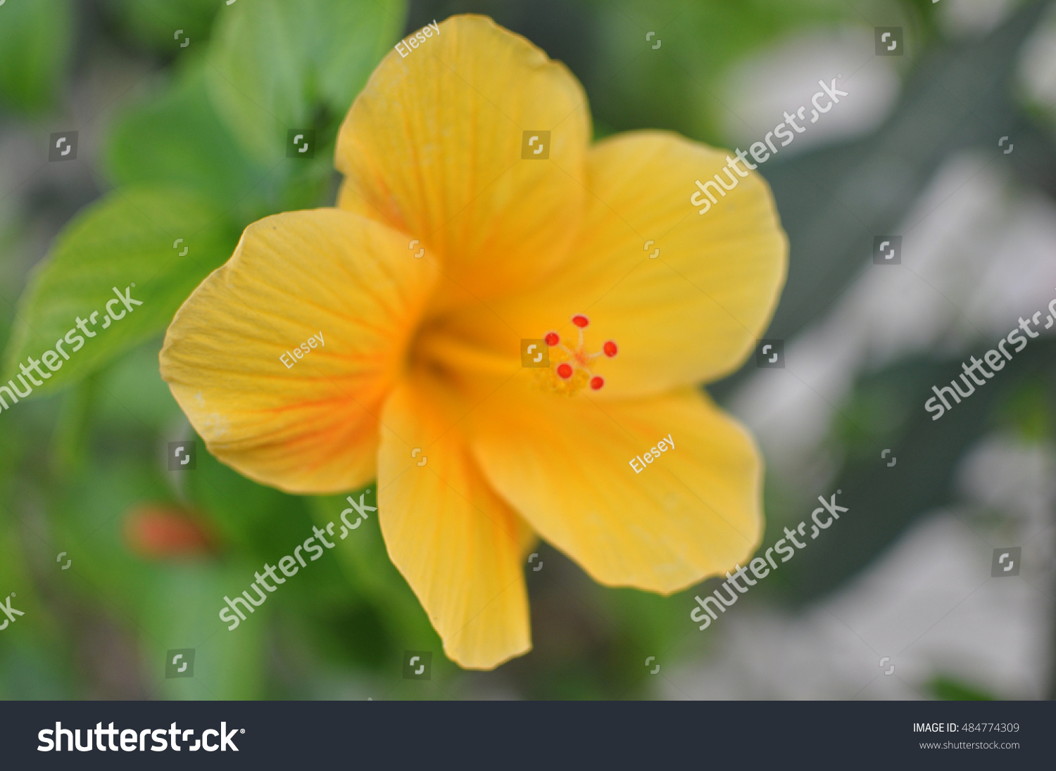 Blooming Tree With Yellow Flower In Soft Focus Beautiful Flowers