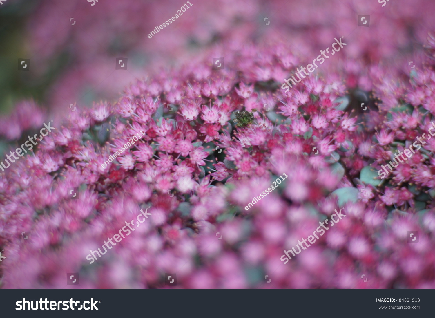 Little Pink Flowers Blossoms On A Green Background Ez Canvas