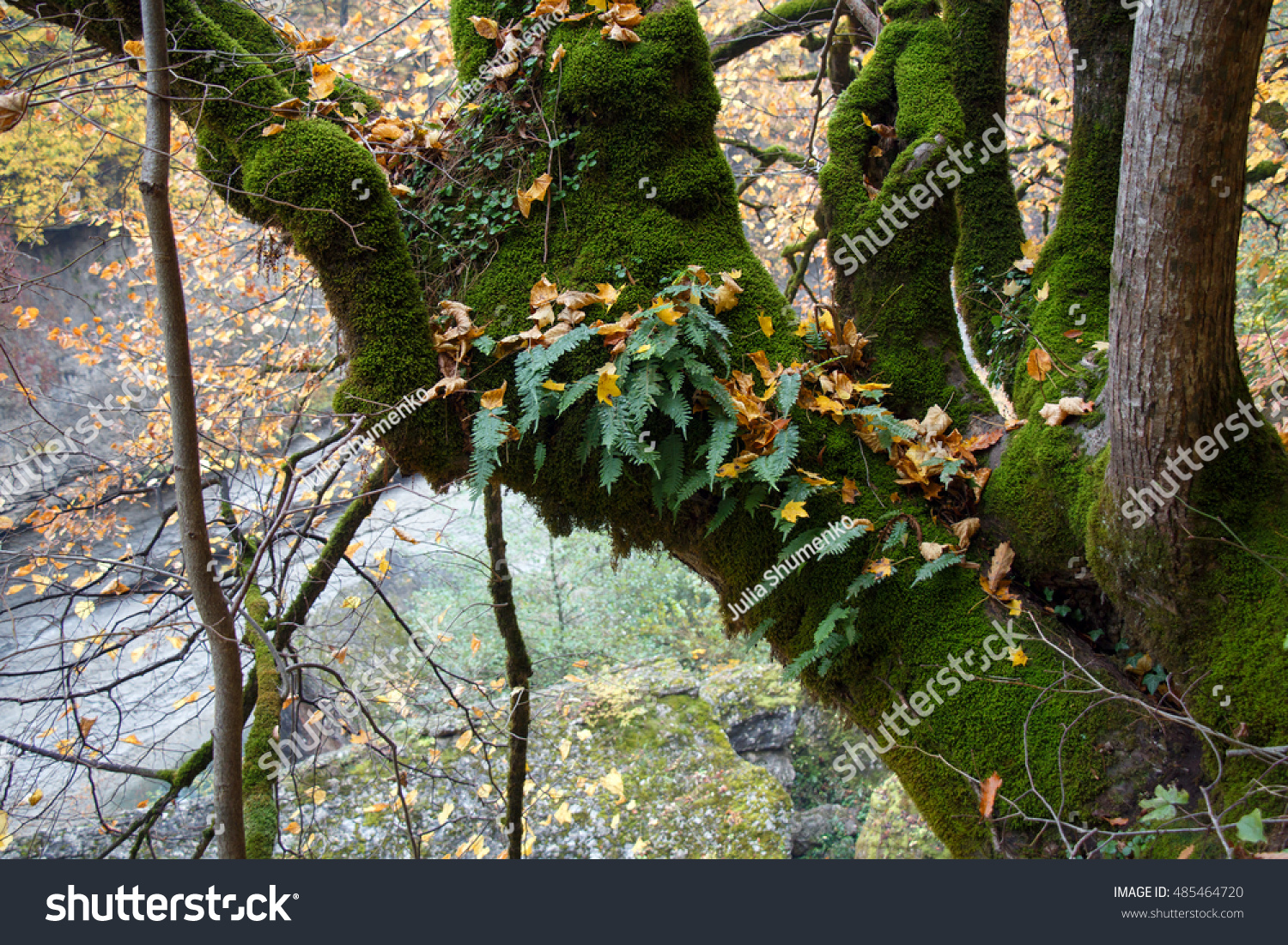 Epiphyte plants moss fern growing on stock photo 485464720 shutterstock - Flowers that grow on tree trunks ...