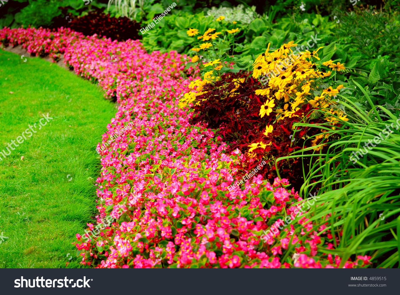 Красивые цветы на клумбах фото и названия многолетние