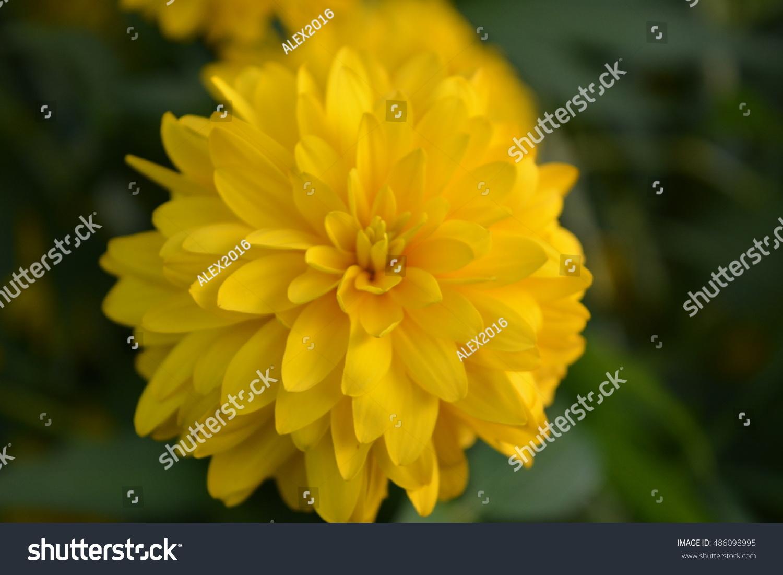Beautiful Yellow Wild Flowers Growing In A Garden Ez Canvas