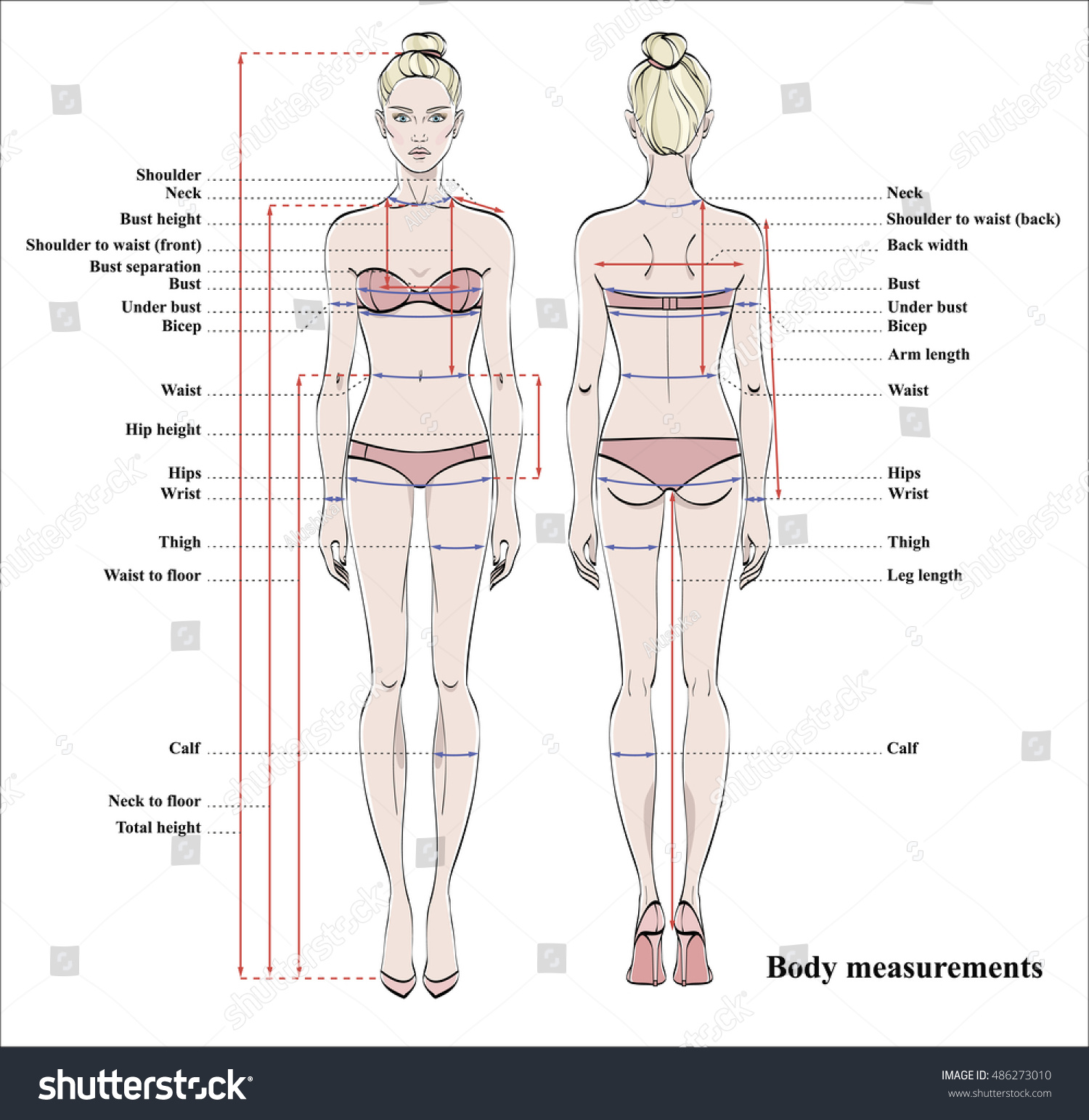 Perfect Female Body Measurements – How to Take Accurate Body Measurements By knowing your body's three-dimensional angles, you'll know if a clothing .