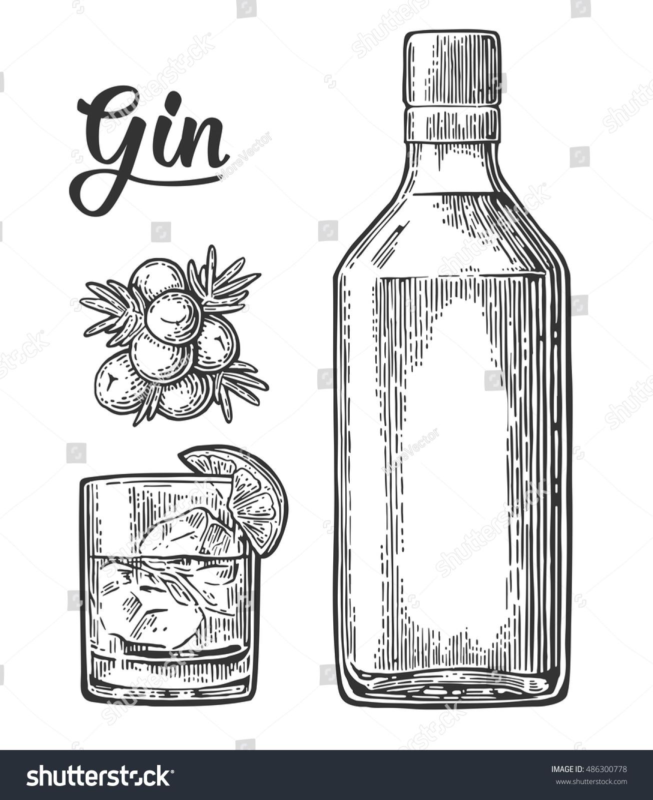 Glass Bottle Gin Branch Juniper Berries Stock Vector Royalty Free