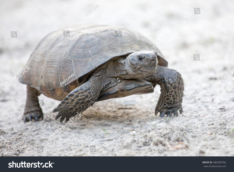stock-photo-the-state-tortoise-of-georgi