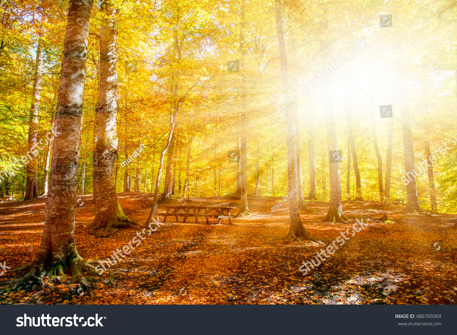 https://image.shutterstock.com/z/stock-photo-autumn-landscape-in-seven-lakes-yedigoller-park-bolu-turkey-486709369.jpg