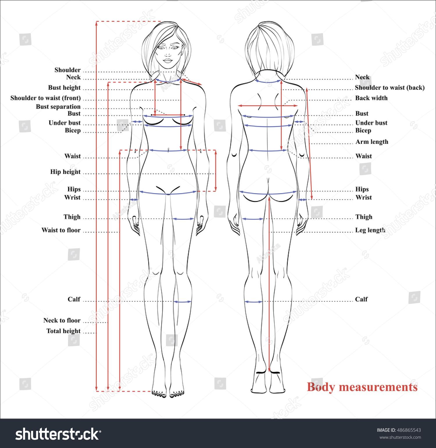 Woman Body Measurement Chart  Scheme For Measurement Human