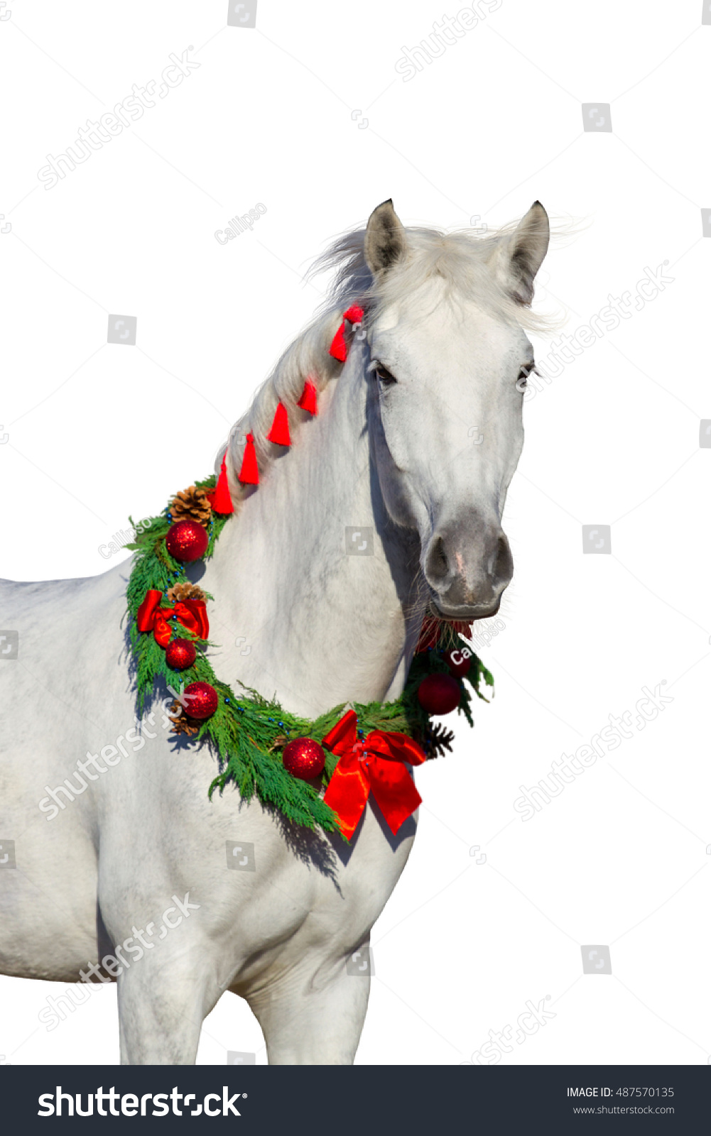 Christmas Image White Horse Wearing Wreath Stock Photo Edit Now 487570135
