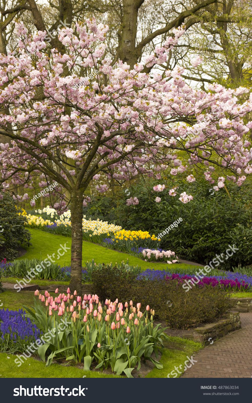 Spring Flowers Keukenhof Garden Netherlands Stock Photo (Royalty ...