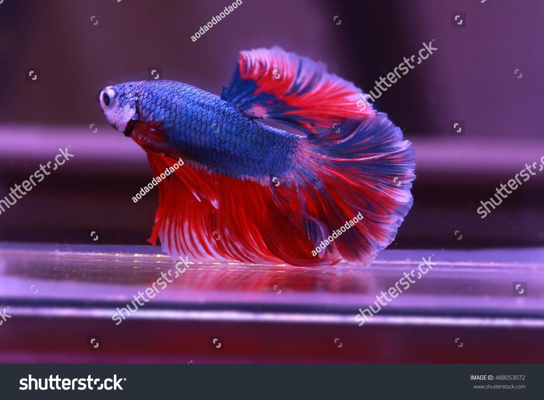 Amazing Blue Colored Aquarium Fish Images - Drawing Coloring ...