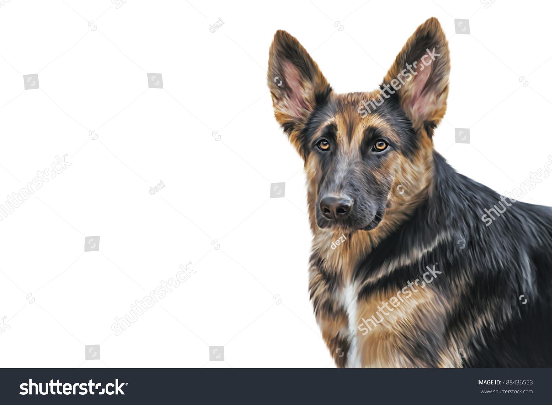 Drawing Illustration German Shepherd Dog Portrait On A White