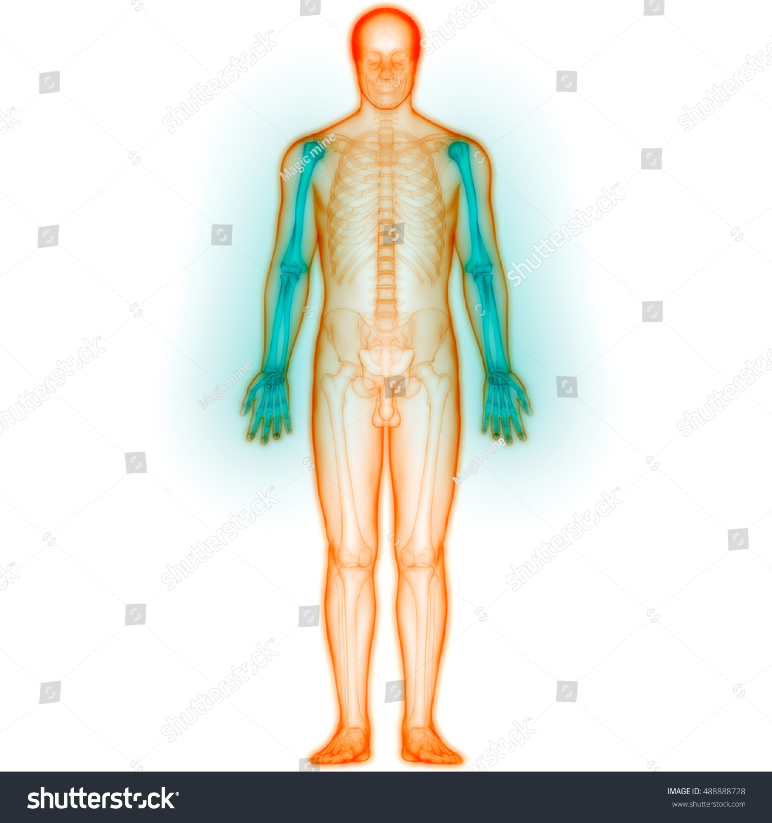 Human Body Joint Pains Anatomy Hand Stock Illustration 488888728