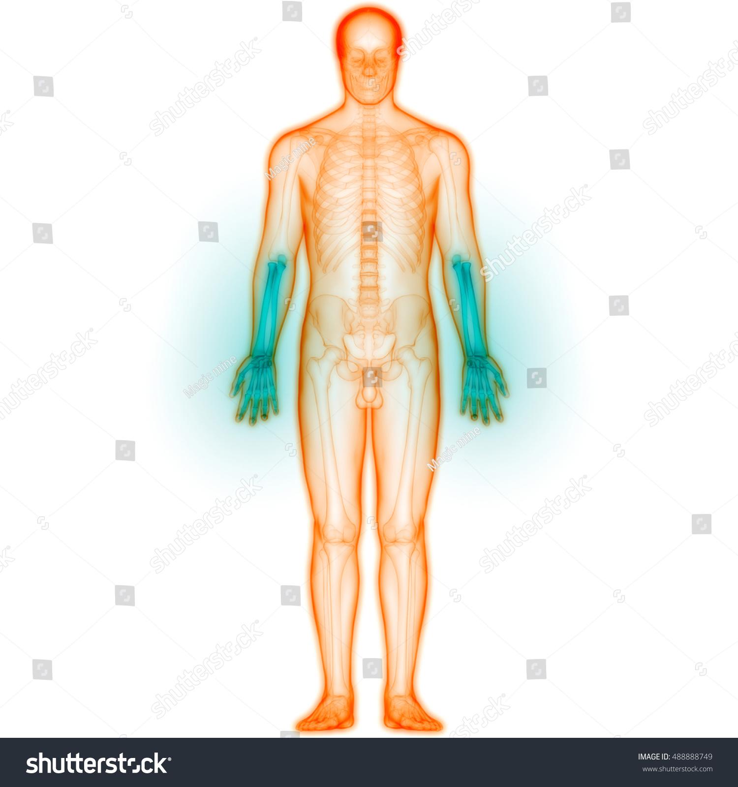 Human Body Joint Pains Anatomy Hand Stock Illustration 488888749 ...