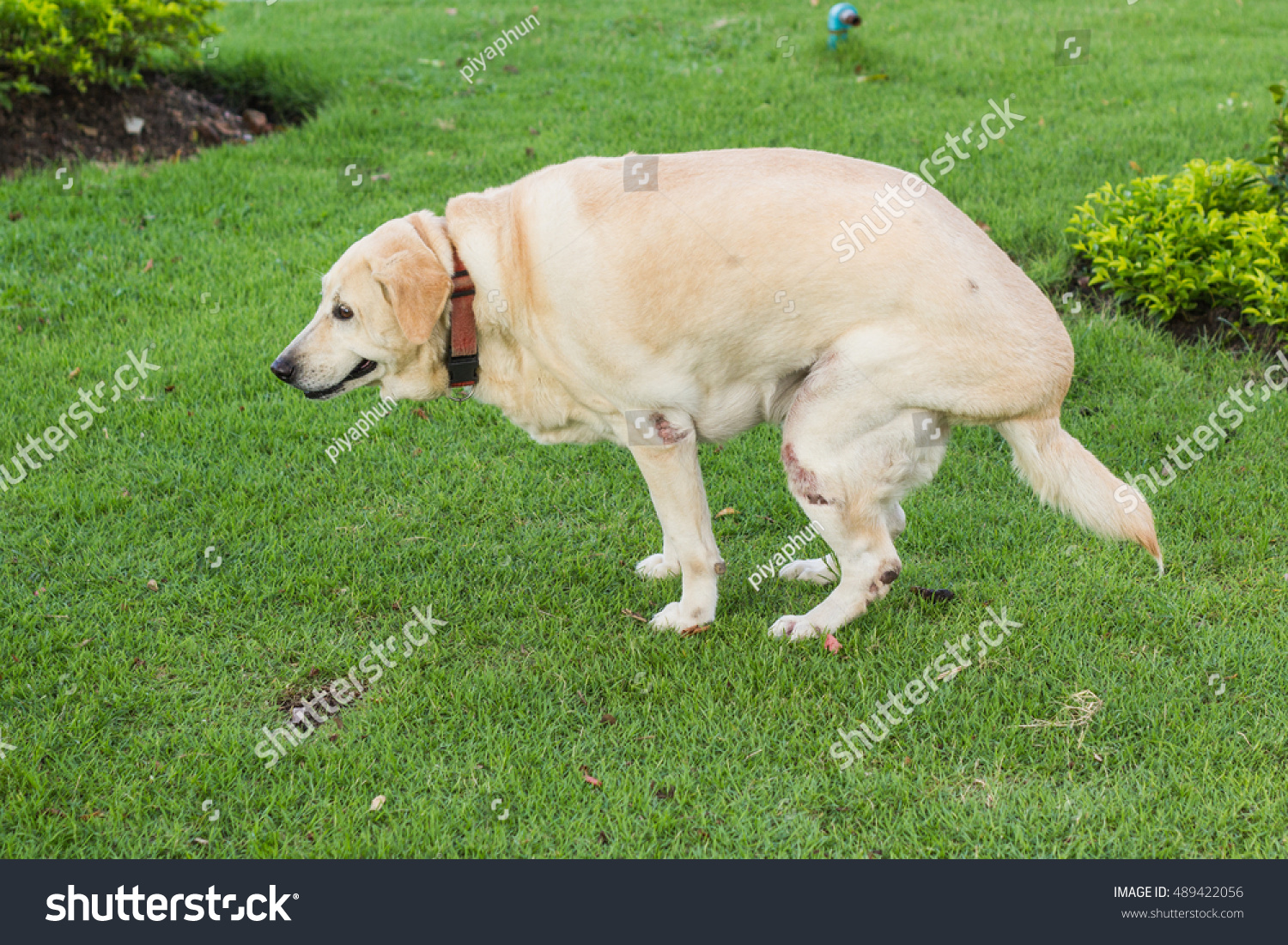 Good Dog A Feces On Green Grass In The Public Graden