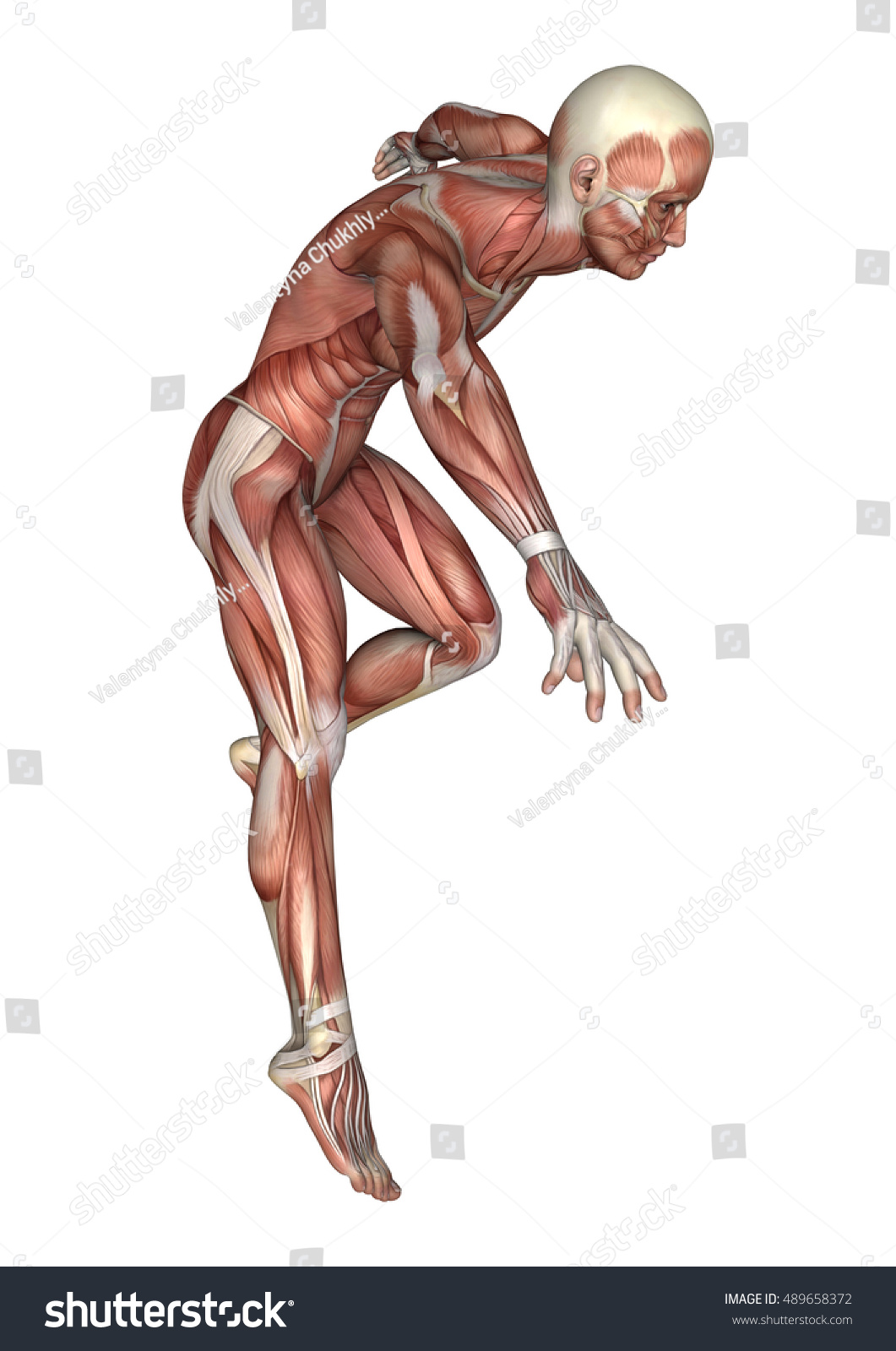 3 D Rendering Male Anatomy Figure Muscles Stock Illustration ...