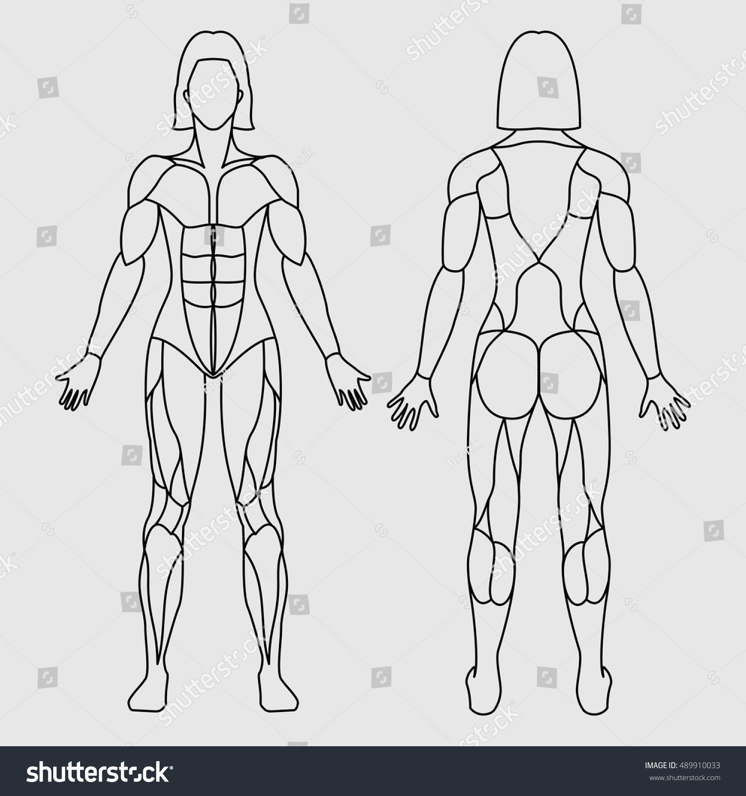 Anatomy Female Muscular System On White Stock Vector 489910033