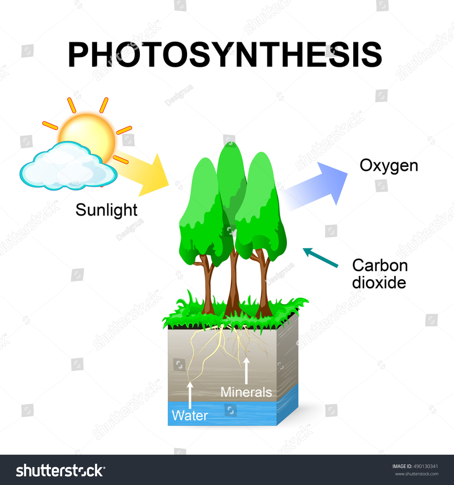 Photosynthesis Schematic of photosynthesis in plants