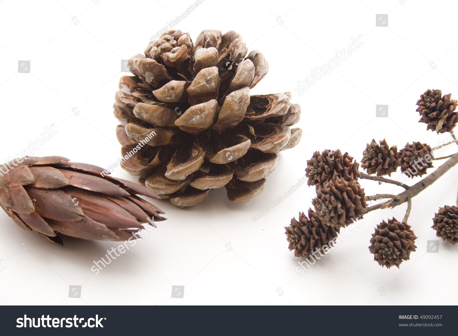 Fir Cones And Dry Flowers Stock Shutterstock