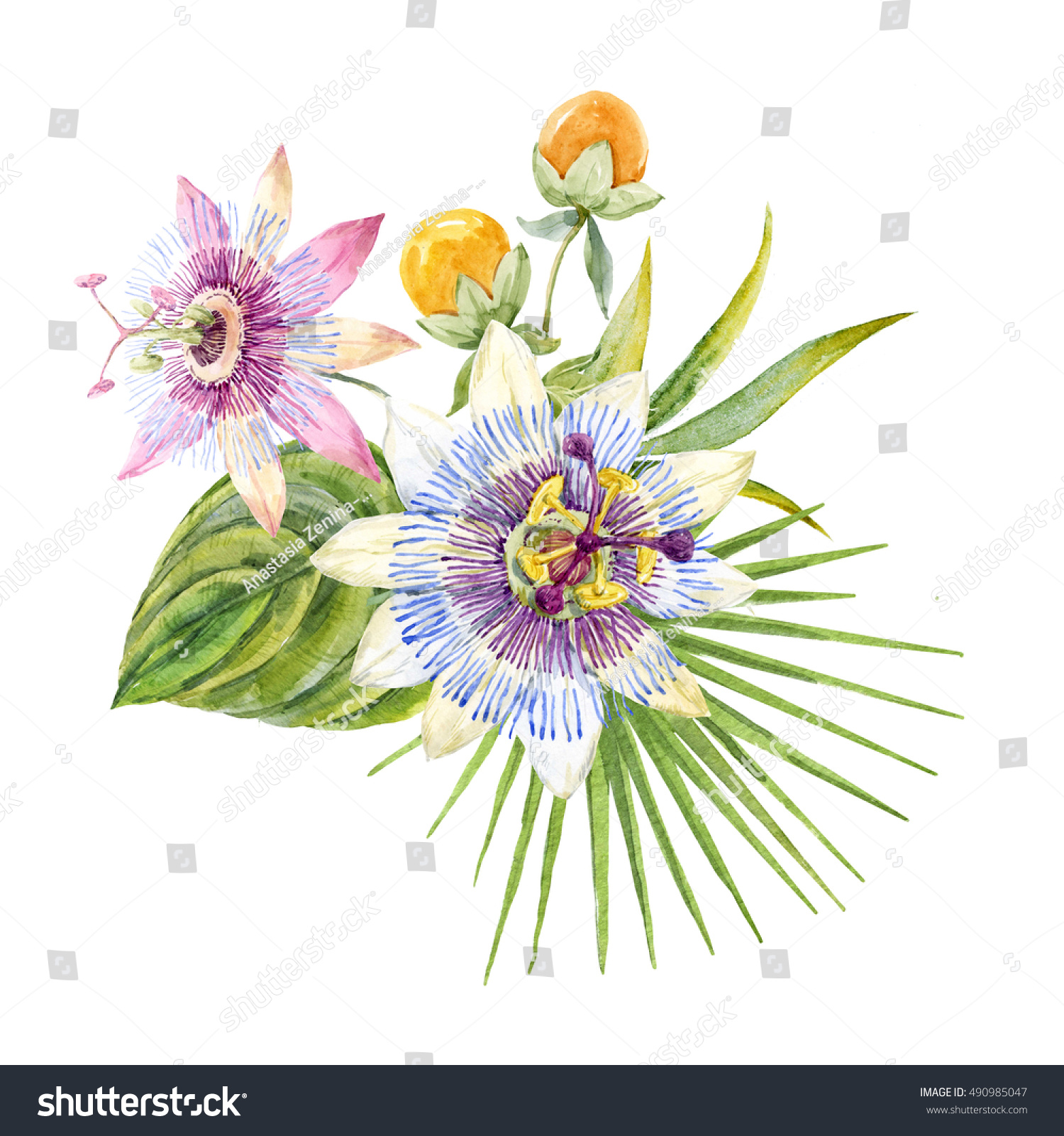 Watercolor Tropical Flower Bouquet Flower Passionflower Stock
