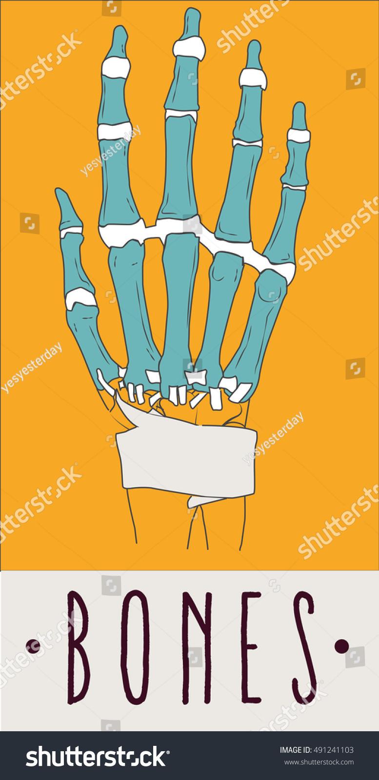 Anatomy Hand Bones Joint Wrist Stock Vector 491241103 - Shutterstock