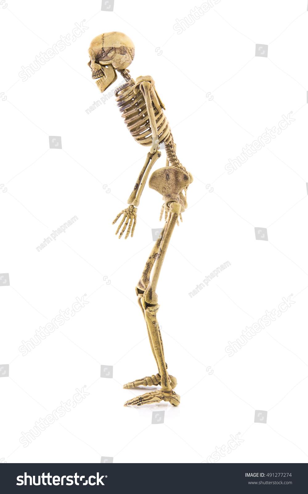 Anatomy Left Side Body Skeleton Human Stock Photo (Edit Now ...