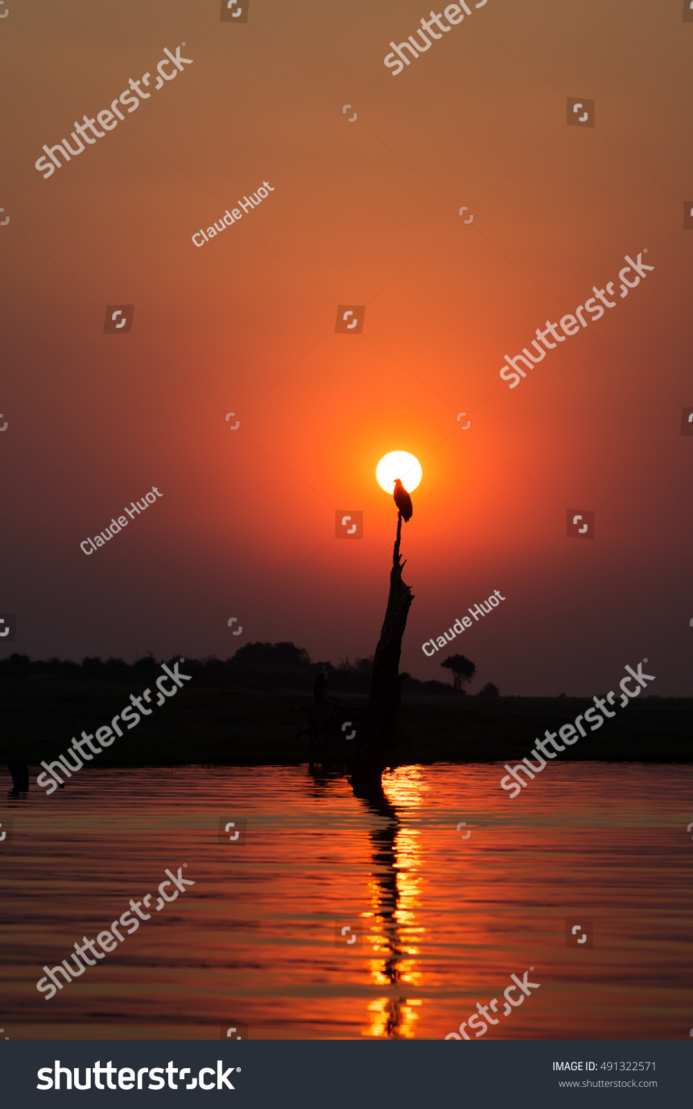 Beautiful red sunset with an african fish eagle (Haliaeetus vocifer) in the sun on the Chobe river, Botswana