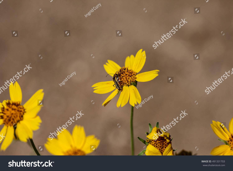 Black Golden Insect On Dark Orange Stock Photo Edit Now 491331703