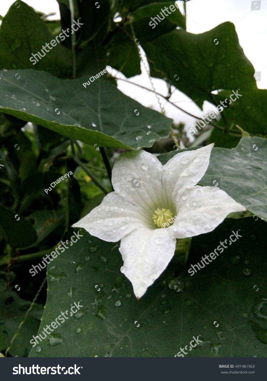 Flower Ez Canvas
