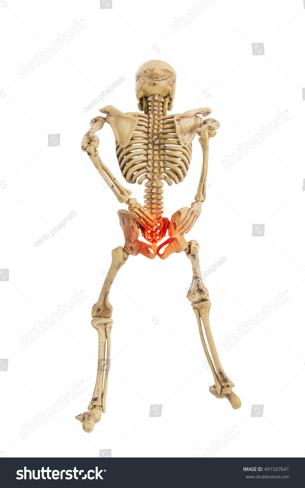 Anatomy Skeleton Human Symtom Low Back Stock Photo (Edit Now ...