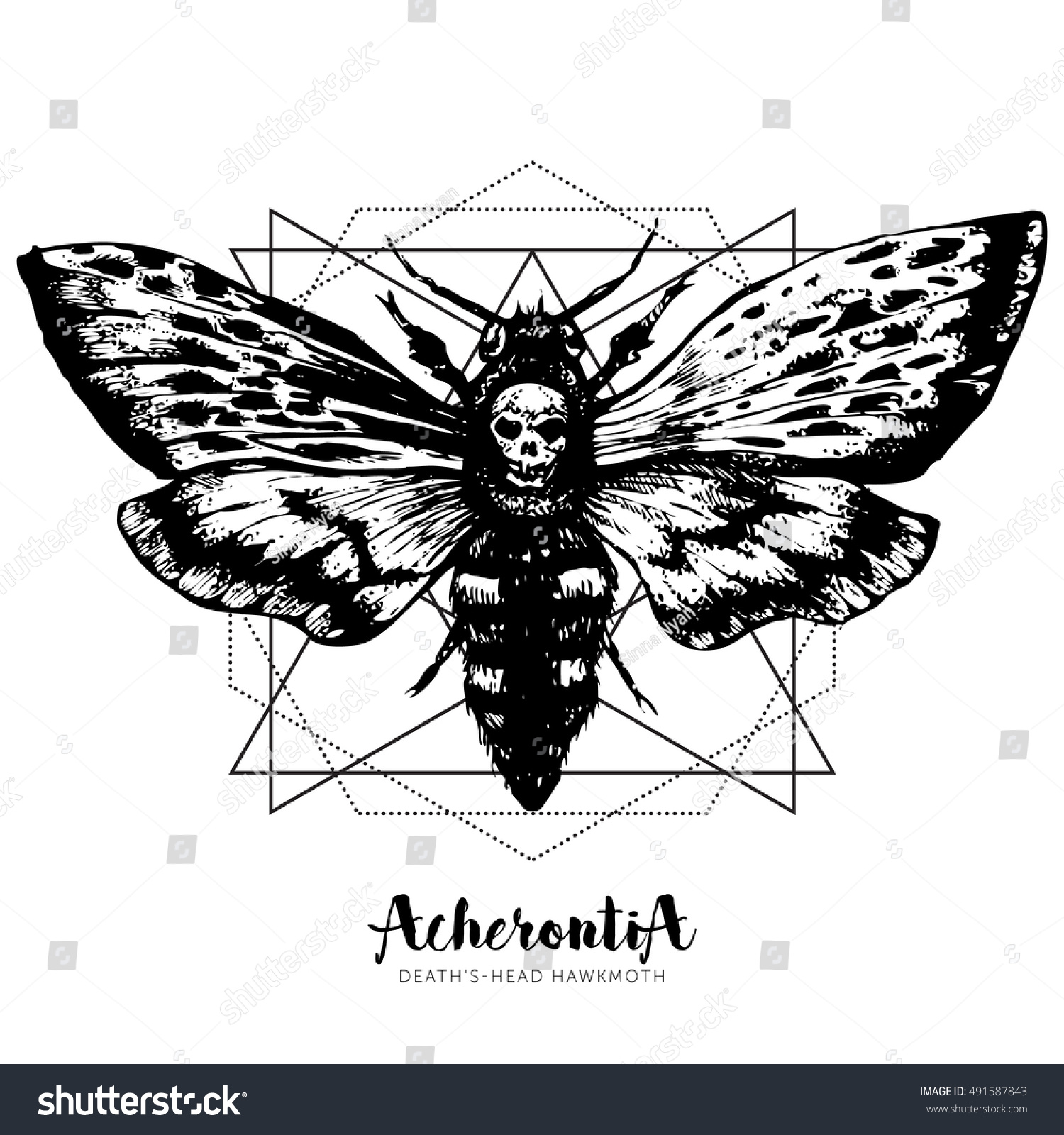 Hand Drawn Vector Ink Illustration In Trendy Engraved Style Moth Design Tattoo Sketch Vintage Drawing For T Shirt Print Poster Coloring Book