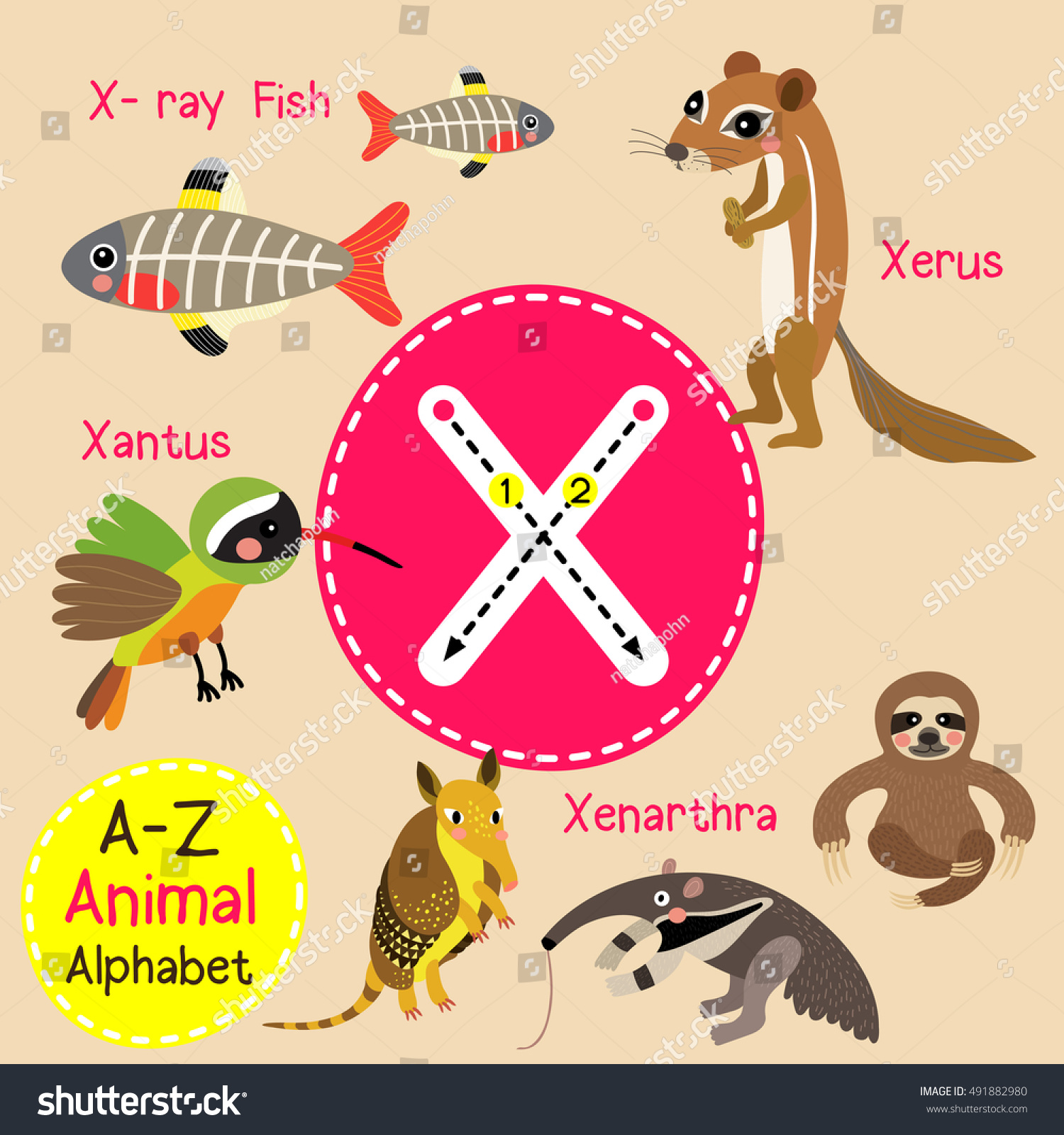 Worksheets Starts With Letter X cute children zoo alphabet x letter stock vector 491882980 tracing of funny animal cartoon for kids learning english vocabulary