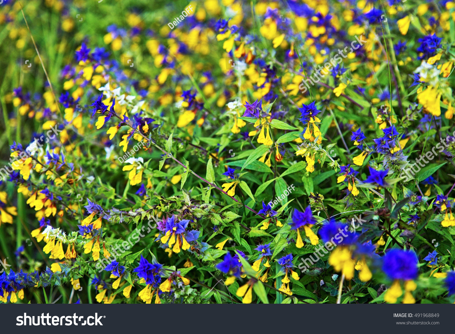 Summer Field With Yellow And Blue Flowers Nature Background Ez Canvas
