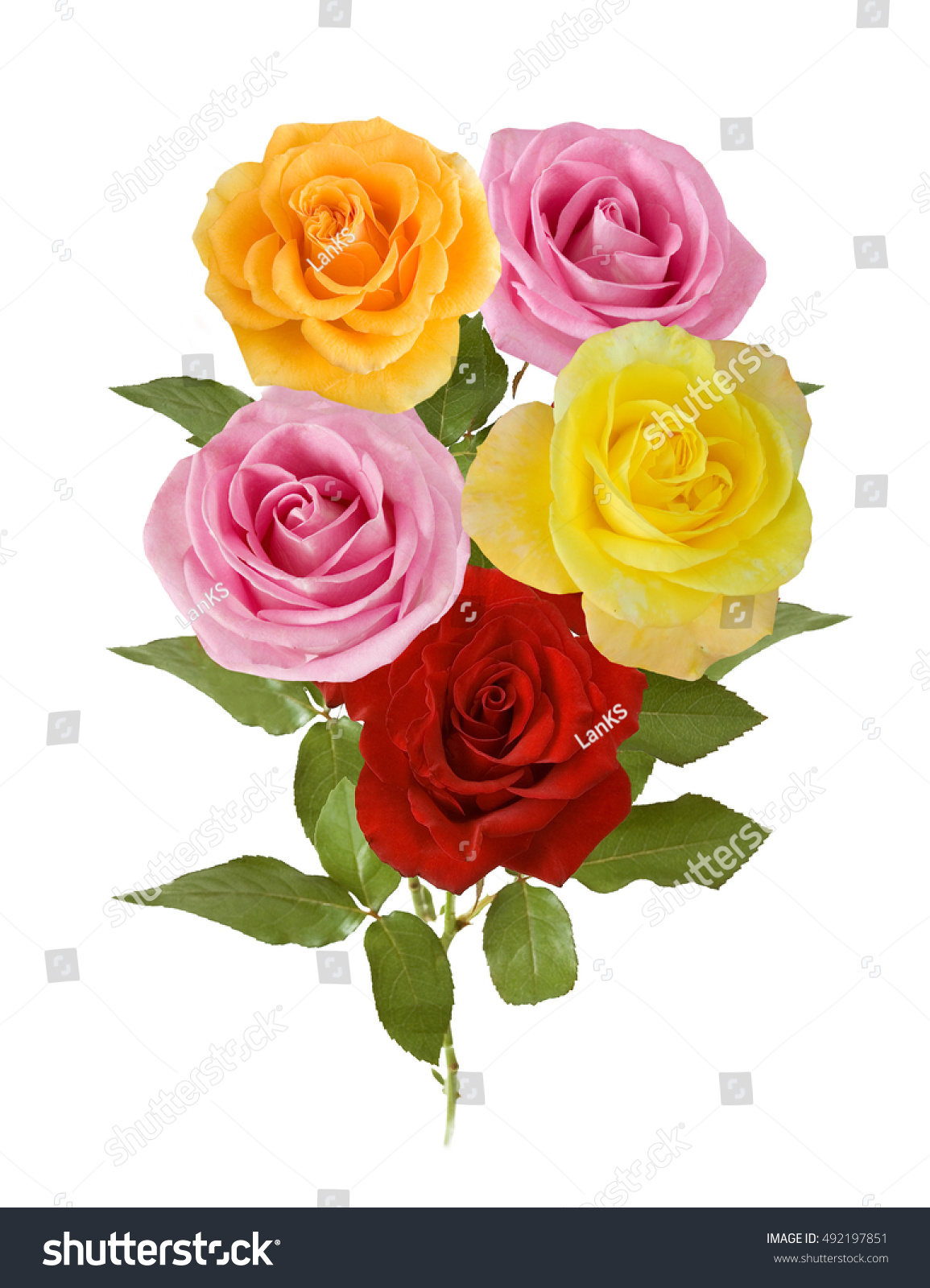 Beautiful pink yellow red rose flowers stock photo 492197851 beautiful pink yellow and red rose flowers bunch isolated on white background dhlflorist Image collections