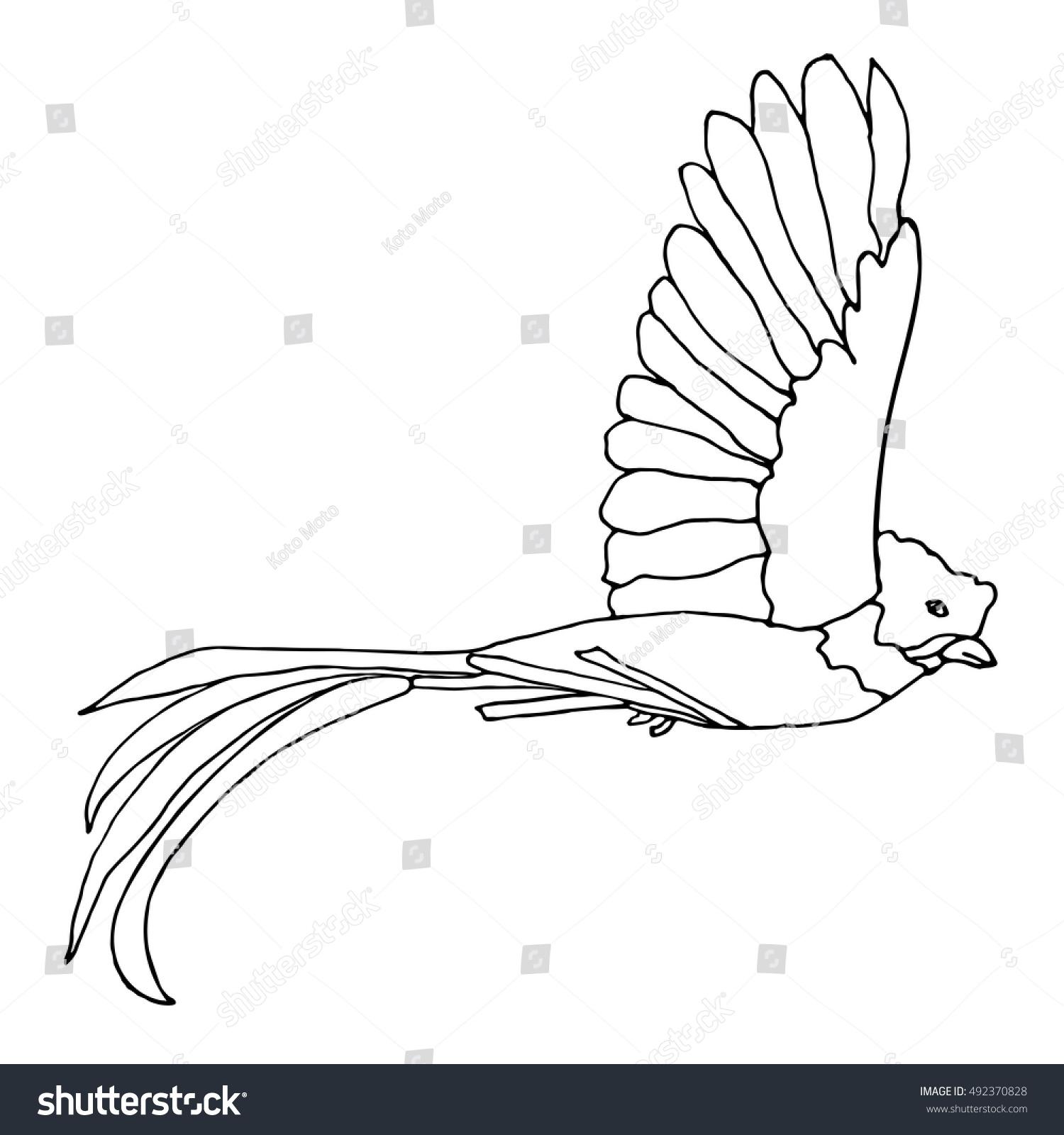 Quetzal Bird Stock Vector 492370828 Shutterstock   Quetzal Animal Coloring  Pages